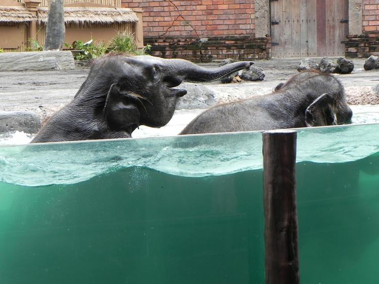 巴厘岛野生动物园——大象洗澡