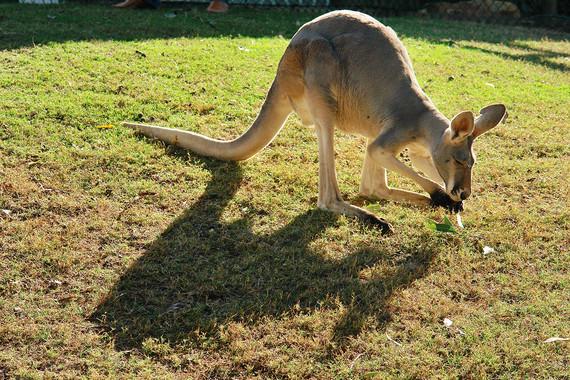 澳大利亚昆士兰州完美假期9日游【南航联运/半自助游/绿岛大堡礁】