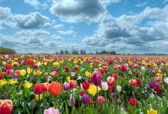 【花季之约·当季爆款】'无自费·无小费'荷兰一地8天、赠送WIFI、全程四星酒店【提前60天报名立减300元】