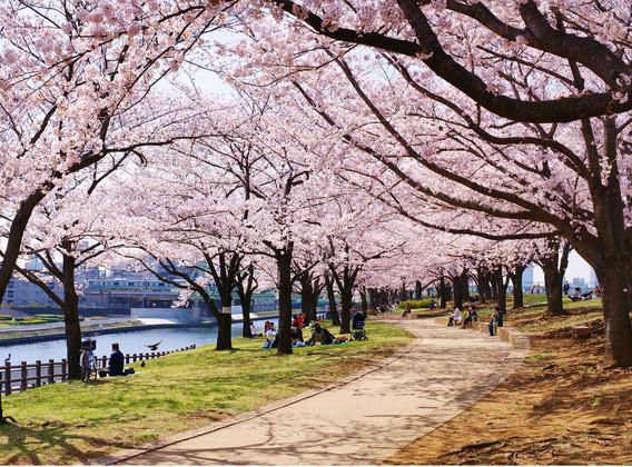 【超值奢玩】日本大阪一地连住4晚5天百变自由行【初遇关西/性价比之选//梅田商圈】