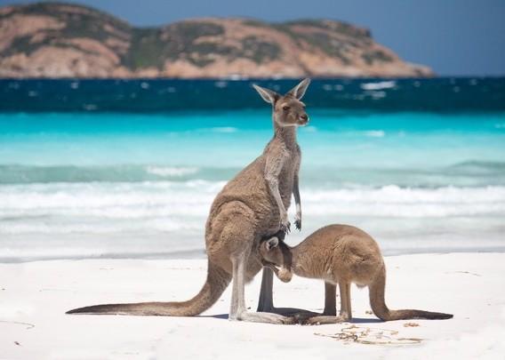 澳航直飞!澳大利亚新西兰大堡礁12日游【大堡礁+墨尔本+水陆两用车+港湾游船+霍比特村】