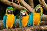 【悦游】巴西+阿根廷+智利+秘鲁+古巴+墨西哥29天【精心特色美食、升级房型赏无敌海景、畅享皇宫贵族礼遇、邂逅南美巴黎的浪漫与大冰川】
