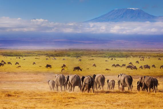 遷徙季 肯尼亞+坦桑尼亞東非探秘之旅12天 QR  【全程當地五星】+【內羅畢升級一晚國際五星】+【博格利亞溫泉酒店】+【百獸宴】