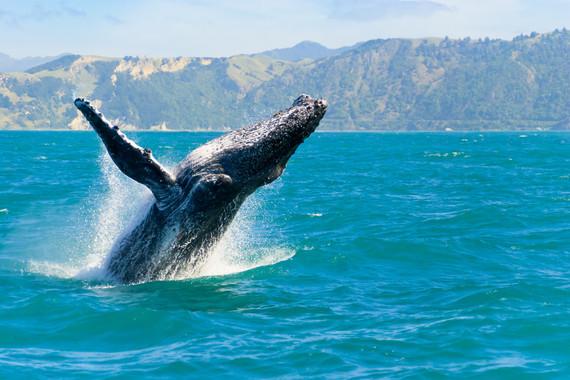新西兰南北岛观鲸观星海峡穿越13日游【邂逅新西兰/纯玩无购物/皇后镇连住三晚/酒庄品酒】