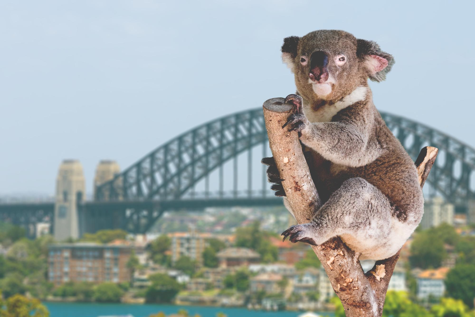 【双城记】澳大利亚6晚9天百变自由行【悉尼+西澳/粉红湖/尖峰石阵/野花】