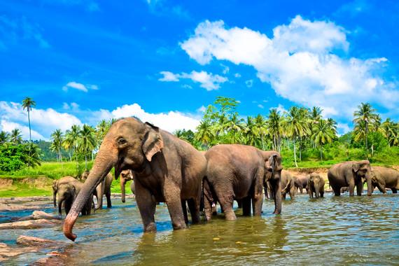 斯里兰卡+新加坡6晚9天 (新加坡航空转机/康提+加勒古堡+高跷渔夫+海上小火车)