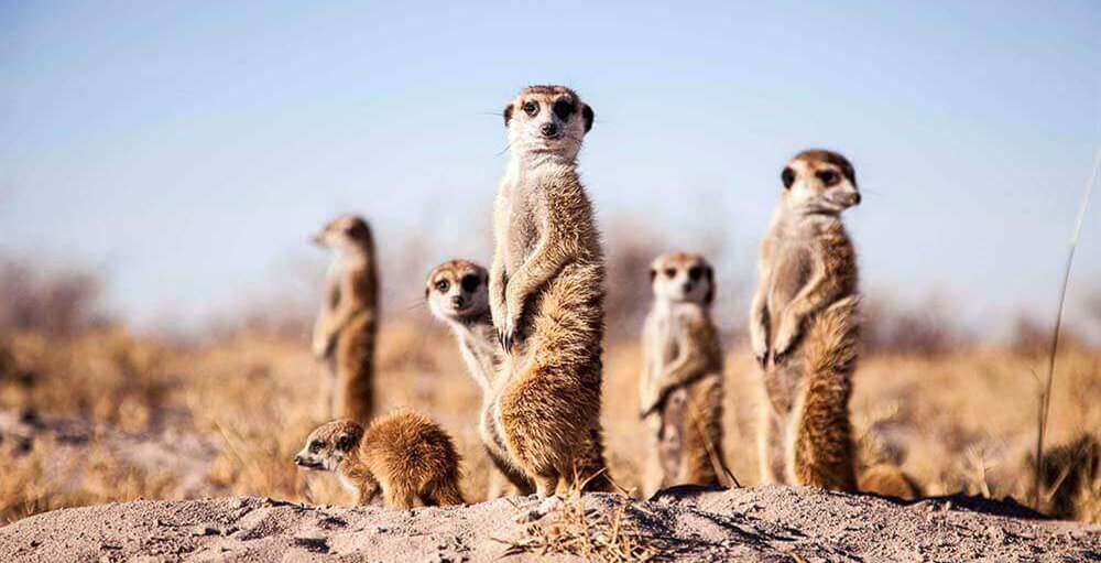 探秘非洲的伊甸园