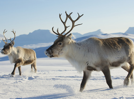 【臻享服务系列】冰雪王国 芬兰+挪威7晚9天私家团【北极光+帝王蟹+圣诞老人村+证书+哈士奇雪橇体验】