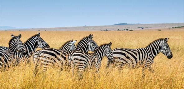 国家地理旅行 肯尼亚 探寻生命本真
