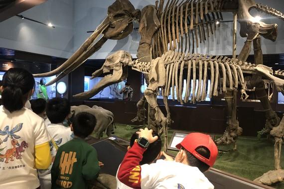 【古生物奇妙夜】重返侏羅紀,夜宿博物館,與恐龍做鄰居